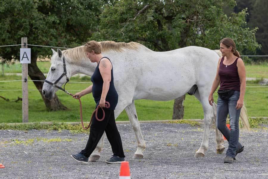 Pferdegestuetztes Coaching - Hypnopferd
